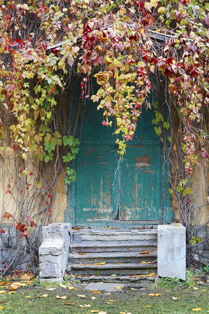 wicket door: Old wooden door in the house, twins wild grapes. Selective focus on the leaves of grape. Stock Photo