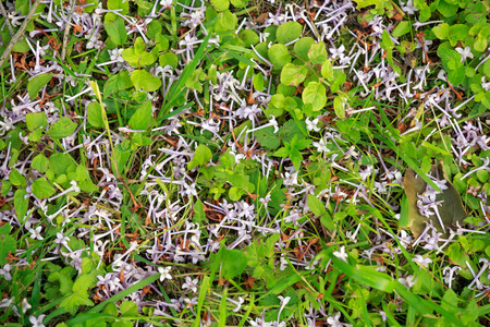 wilting: Background. Green grass and withered petals lilac. Stock Photo