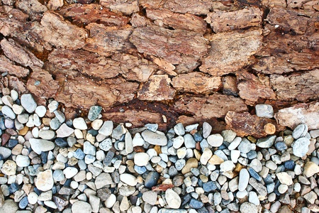 rock bark texture photo