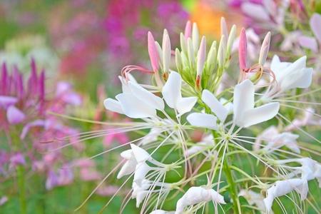 papaya flower: beautiful flower