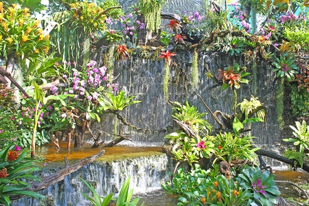 waterfall in the garden photo