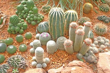 Cactus Stock Photo - 11780259