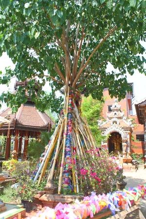 Bodhi tree Stock Photo - 13244311