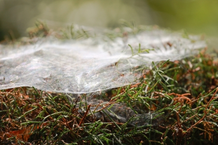 Plant with spider nets Stock Photo - 13710160