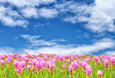 flower over blue sky photo