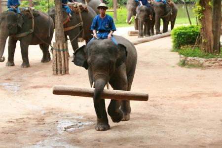 Elephant show in Thai Elephant Conservation Center Stock Photo - 15318949