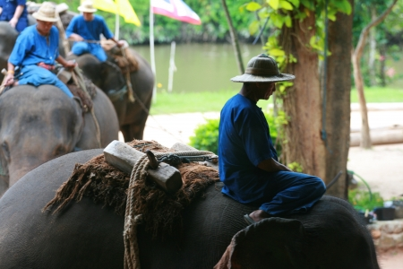 Elephant show in Thai Elephant Conservation Center