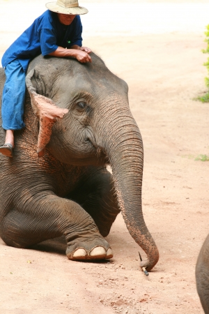 Elephant show in Thai Elephant Conservation Center Editorial