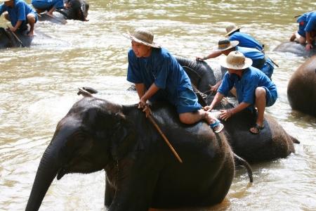 Elephant show in Thai Elephant Conservation Center Stock Photo - 15246685