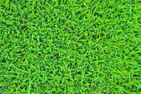 grass texture photo
