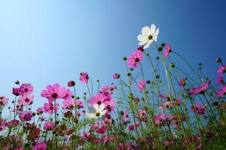 blossom spring Stock Photo - 17342457