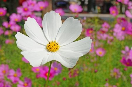 blossom spring photo