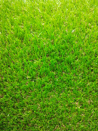 Green grass texture from a sport field