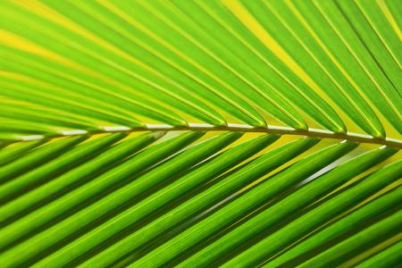 tropical leaves background Reklamní fotografie