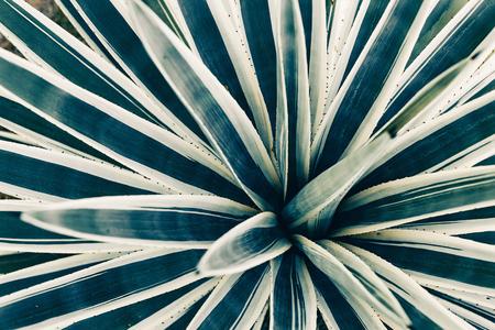 tropical bush leaves texture close up