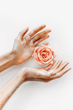 pink rose in women`s hands with gold on petals close up