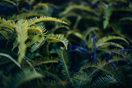 green leaves outdoors close up Reklamní fotografie