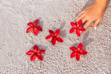 red frangipani flowers plumeria and woman han close up. space for text Stock Photo
