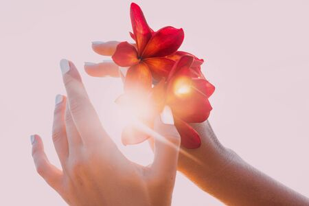 woman hand holding frangipani flower at sunset on the beach close up