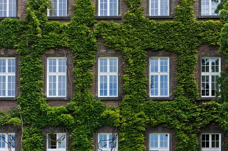 windows: Windows. Stock Photo