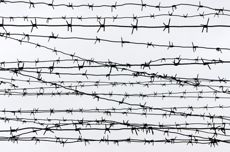 Barbed wire on white background.