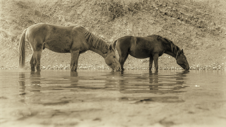 Two horses at the watering hole.