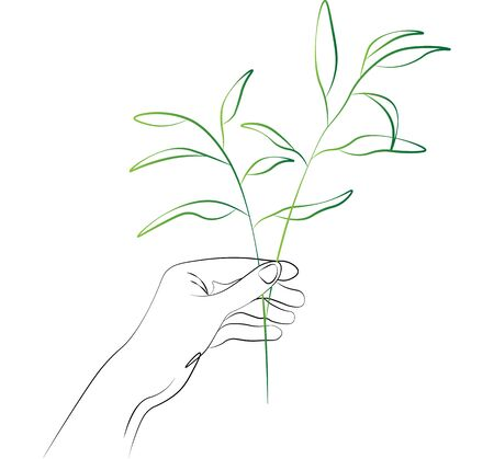 women hands holding herbals, natural pharmacy, herbs. Vector Line