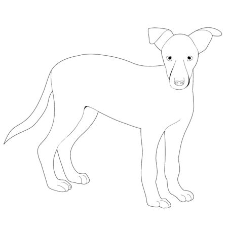 vector, on a white background, outline, sketch dog stands
