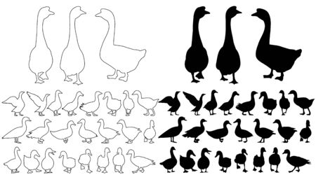isolated silhouette of geese and ducks 向量圖像