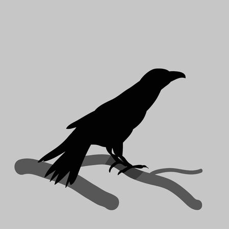 vector, isolated silhouette of crows, bird