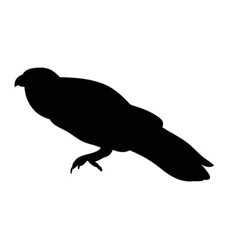 isolated silhouette of a bird, ravens