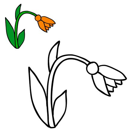 vector, isolated flower, coloring book Illustration