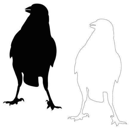 vector, silhouette ravens, birds outlines