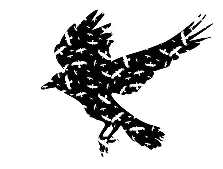 silhouette of the raven flies
