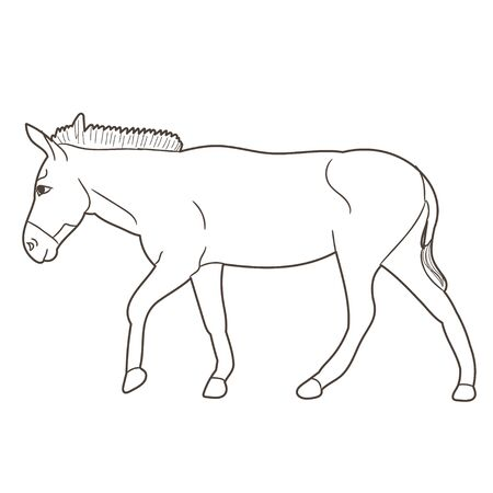 vector, isolated donkey sketch going