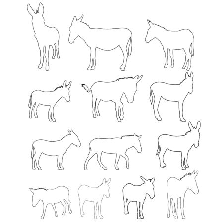 vector, isolated contour of donkeys, sketch, set