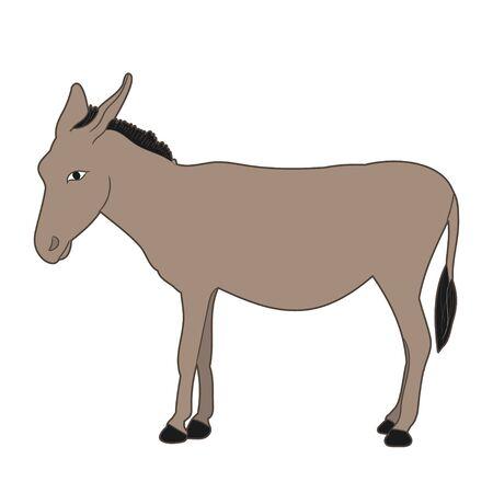 donkey standing on white background