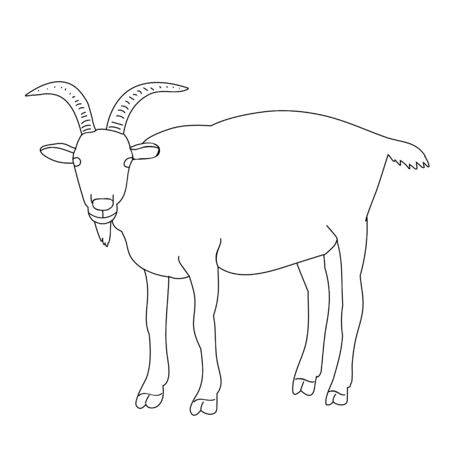 isolated sketch of a goat, on a white background