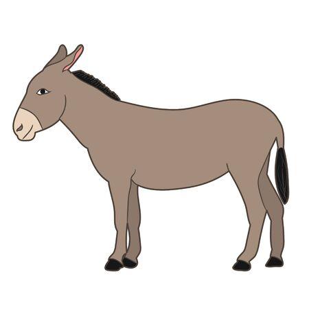isolated gray donkey standing on white background Ilustração