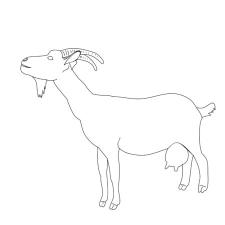 vector, isolated sketch of a goat, on a white background