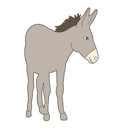 vector, isolated donkey vector