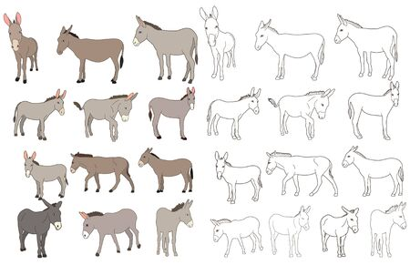 isolated, donkey, set vector