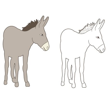 vector isolated donkey drawing