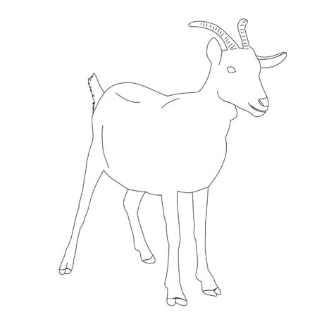 isolated sketch of a goat with horns, on a white background