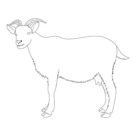 sketch of a goat is standing, on a white background Vettoriali