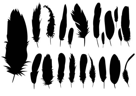 vector, isolated silhouette of a feather, collection