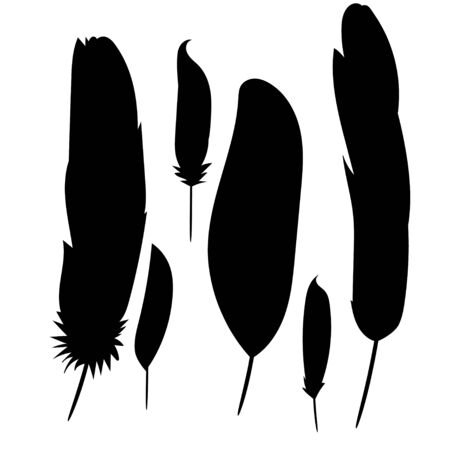 silhouette of a feather, collection