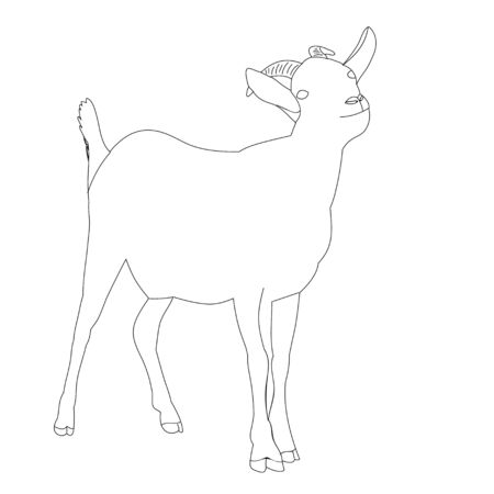 vector, isolated sketch of a goat is standing, on a white background Vettoriali