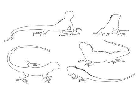 isolated contour lizard on white background, icon Illustration