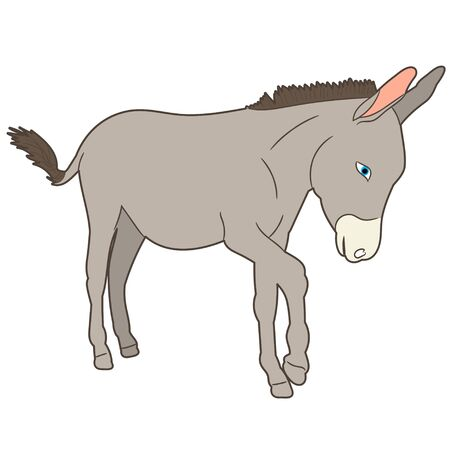 isolated donkey gray goes
